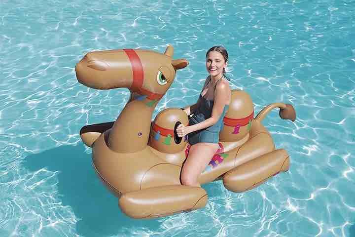 kamel-auf-wasser-schwimmtier